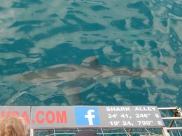 The sharks were so close! What an adventure! , tbressler - July 2016