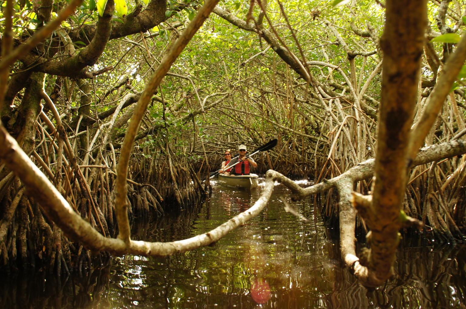 MORE PHOTOS, Mangrove Tunnel Kayak Eco Tour