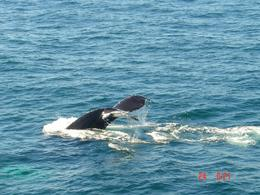 One of the best photos from my Boston Whale Watching Cruise., Joseph S - October 2007