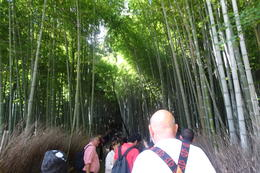 walking through the bamboo grove , Vega R - November 2016