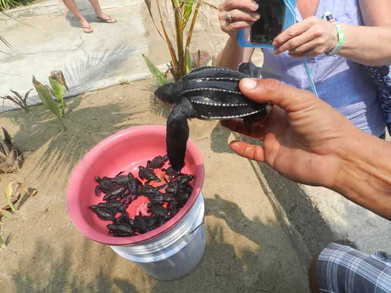 Coyuca Lagoon Baby Turtle Release Lunch & Boat Ride