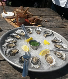 Delicious fresh, raw oysters at Hog Island Oyster Co., Emily G - April 2015