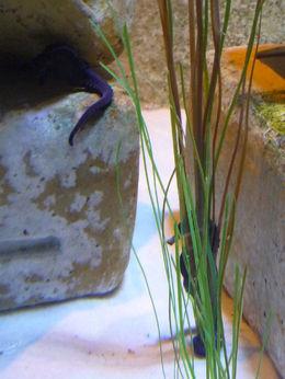 wunderschönes Aquarium im Atlantis bei freiem ticket , Eva N - January 2016