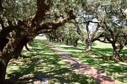 Oak Alley Plantation , Janet F - November 2016