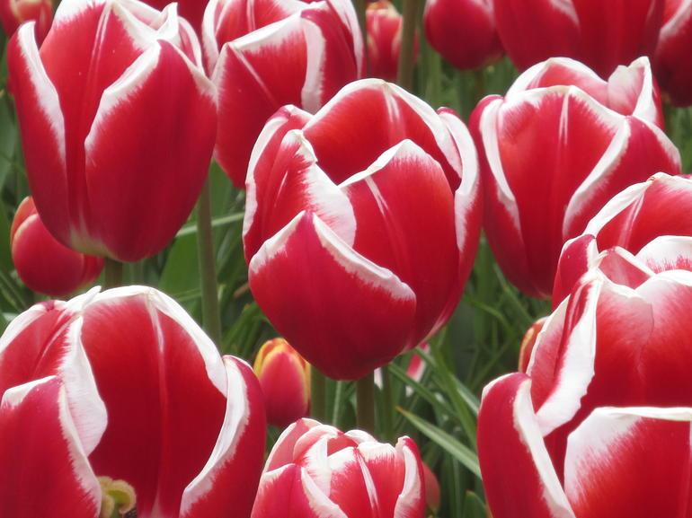 tulip thai sexiga underkläder stockholm