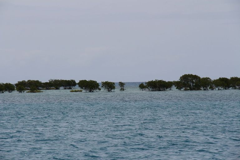 Wavedancer Low Isles Great Barrier Reef Sailing Cruise from Cairns photo 9