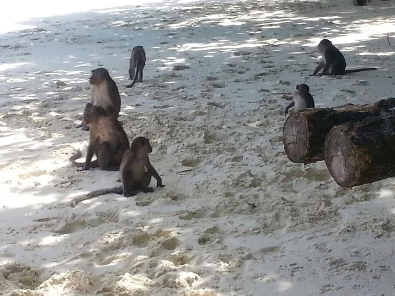 Monkey Island - Phuket