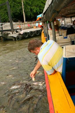 Feeding the fish - September 2008