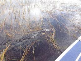 One of the many alligators we saw on our tour , Marti R - December 2013