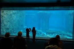 Sydney Taronga Zoo Aquarium, Paula - June 2015