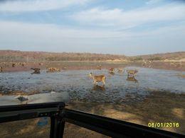 Lots of antelopes, wild boar etc. , David W - January 2016