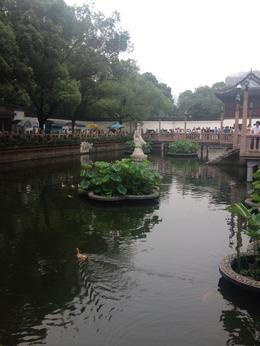 Yuyuan Garden in Old Shanghai, Cat - August 2012