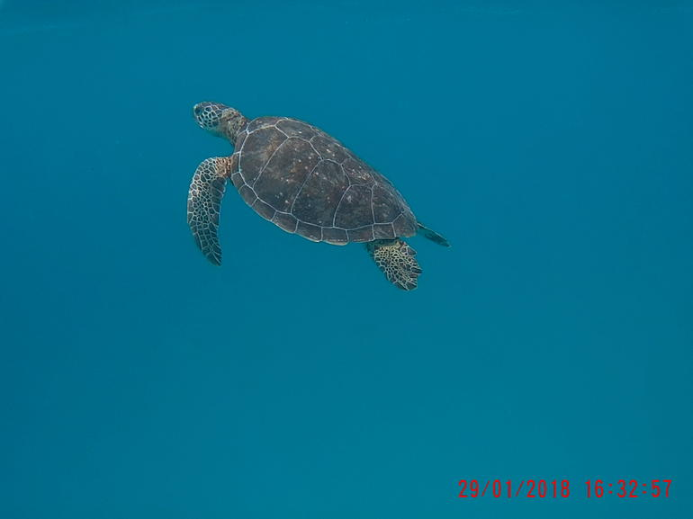 "Barbados ""Shared"" Turtle Swim and Shipwreck Tour photo 12"