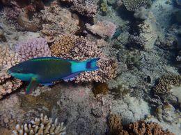 Snorkeling spot , Teresa C - November 2015