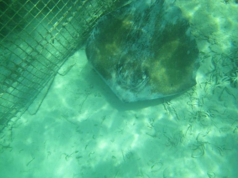 Sting Ray! - Punta Cana