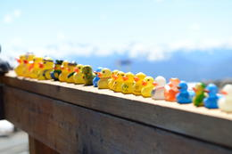 Rubber ducks!, Jeff - August 2013