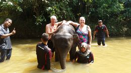 Richard and Greer helping give the baby elephant a bath in the river. , G D - February 2015