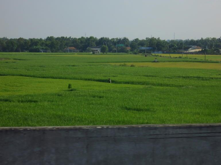 Lush Rice Fields - Ho Chi Minh City