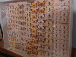 Butterfly Museum, St. Tropez , Petros H - January 2016