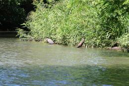 Herons on River Float trip , Tom S - November 2016
