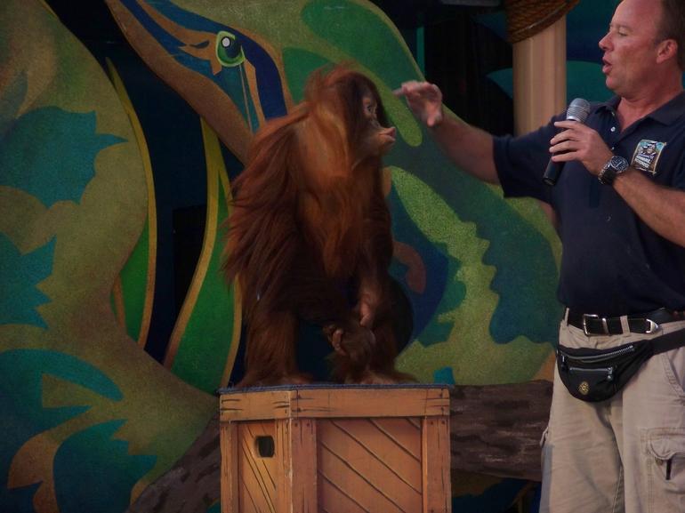 Animal Show - Los Angeles