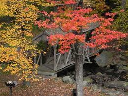 Bridge in Willard Brook State Forest , Elsa C - November 2013