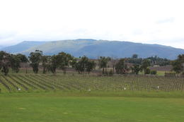 Yarra Valley Wine and Winery Tour from Melbourne, Emma - September 2011