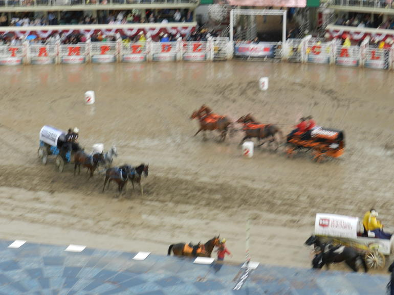 Chuckwagon racing - Calgary
