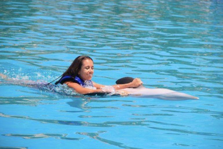 Dolphins - Los Cabos