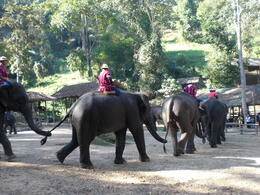 Also get to ride the elephants - March 2013