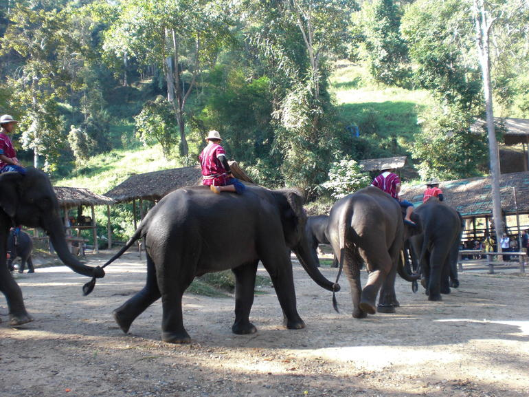 Elephant - Bangkok