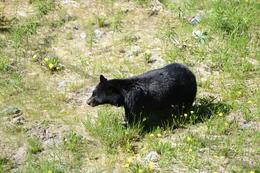 Bear siting!, Jeff - August 2013