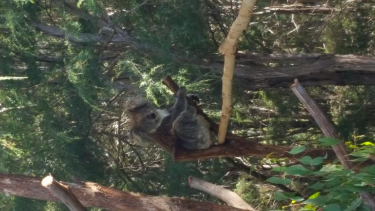 Yarra Valley Wildlife & Wine Day Tour from Melbourne with Healesville Sanctuary photo 17
