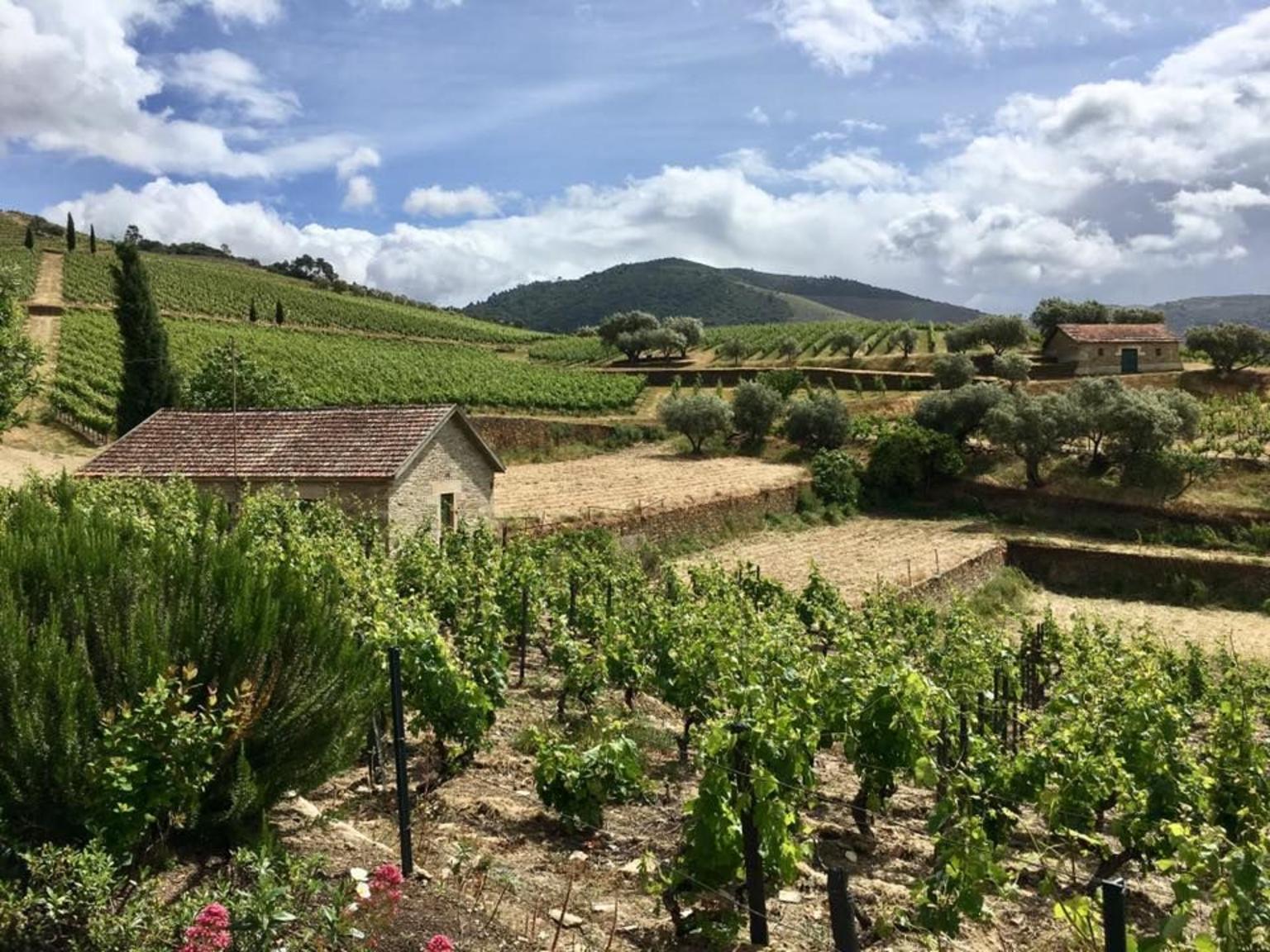 MÁS FOTOS, Excursión de un día completo para grupos pequeños al Valle del Duero y recorrido vinícola con almuerzo y cata