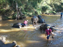 Watching the elephants get their daily bathing - March 2013