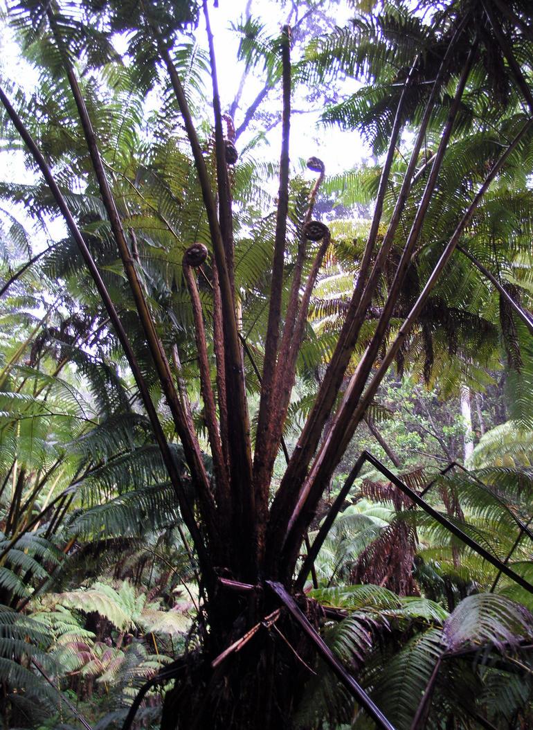 jungle - Oahu