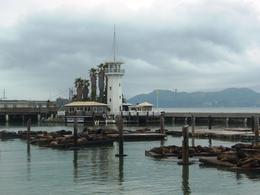 The sea lions lounging at Pier 39 , Leah - May 2011