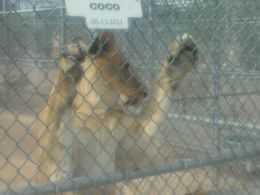 The Lions were really close to us., jaguilar958 - December 2014