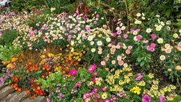 Garden at Avoca , Mary C - June 2017