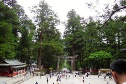 Toshugu Shrine surrounded by Cedar Trees , Sandra D - June 2017