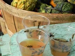 Wasps in hot apple cider , Elsa C - November 2013