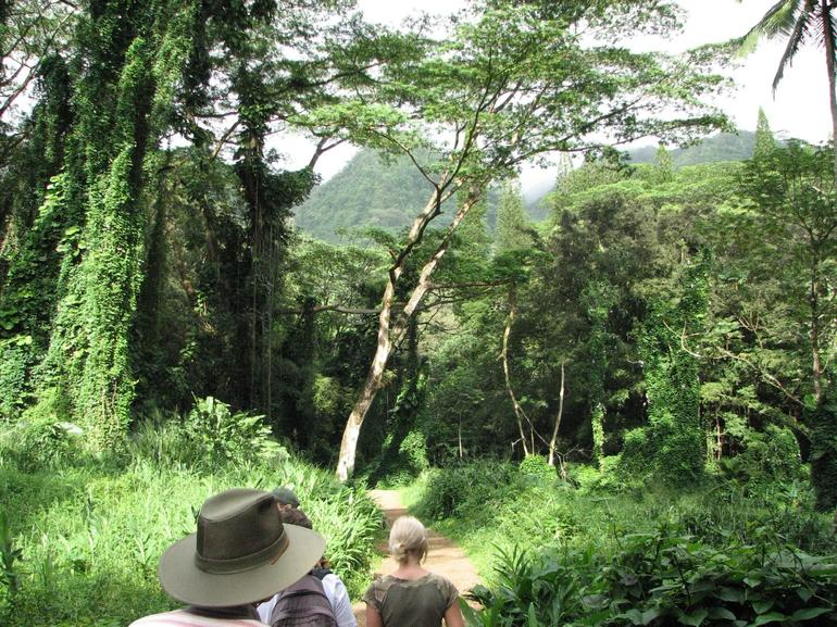 On hike to Manoa Falls through rainforest - Oahu