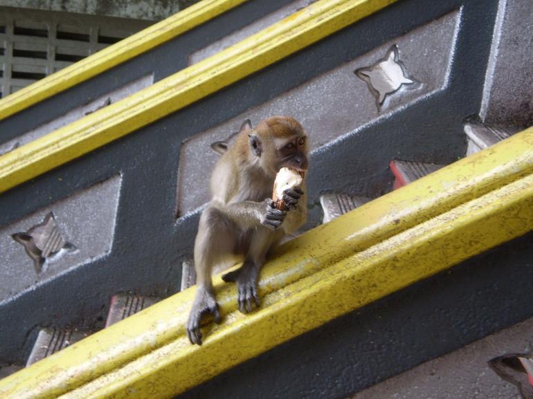 Monkey See... Monkey Have... - Kuala Lumpur