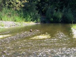 some ducks, Casey - September 2013