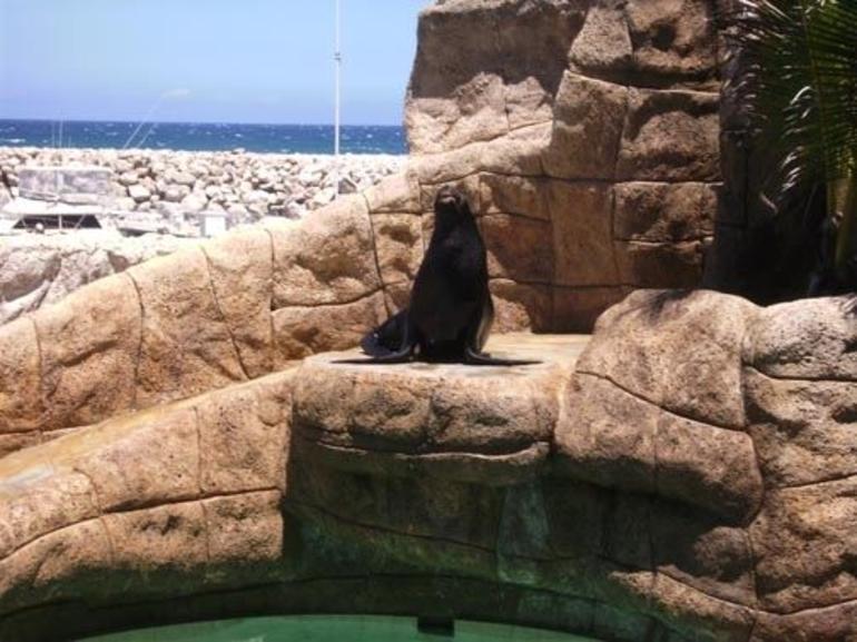Sea Lion - Puerto Plata