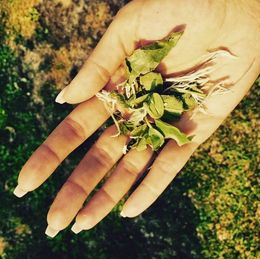 Heavenly smells from the plants around the winery. , Eva L - August 2015