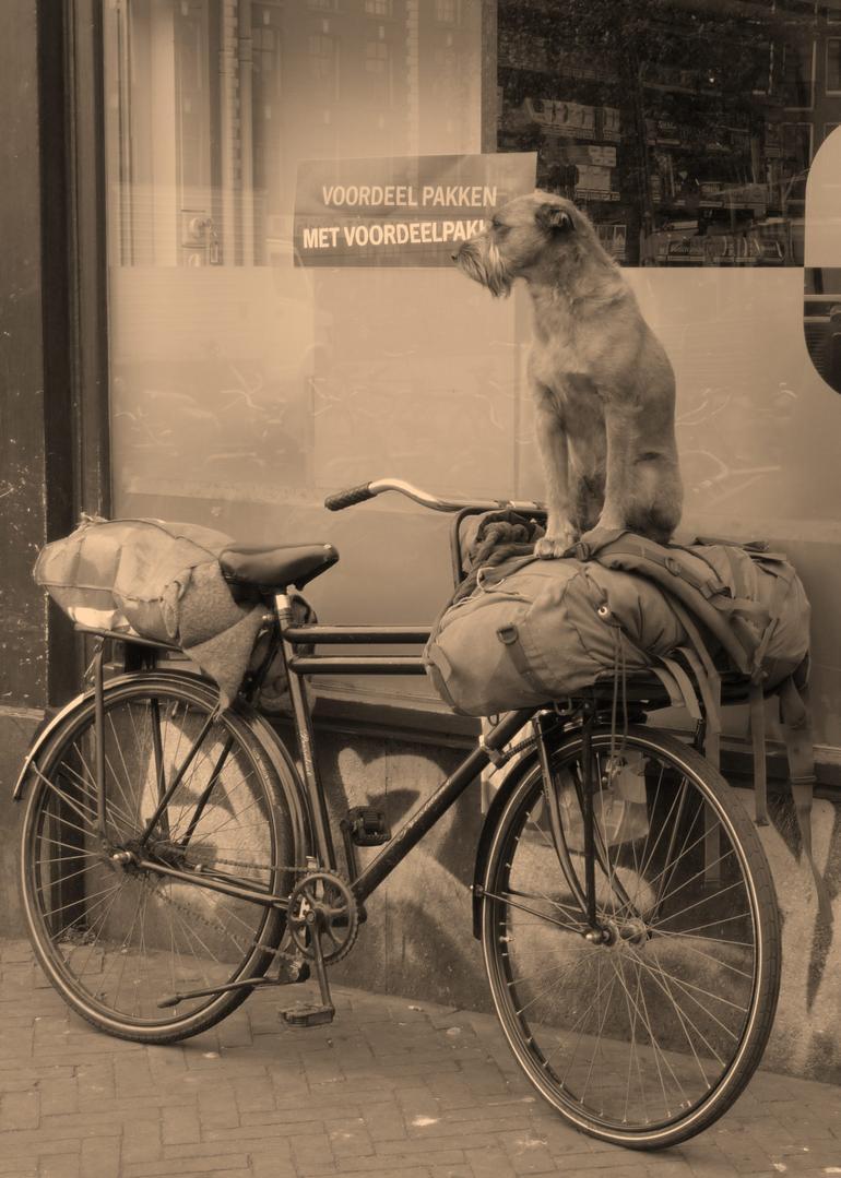Dog on Bike - Netherlands