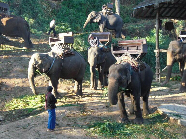 Elephant Rides - Chiang Rai