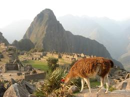 Llama with Machu Picchu in the background, Bandit - December 2010