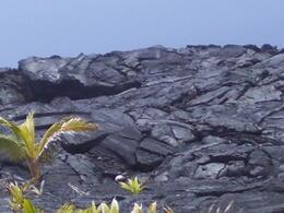 Lava Flow - Big Island 5-2-2011 , Linda Z - June 2011